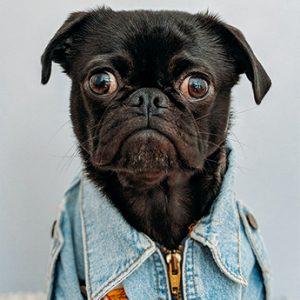 hond in jas